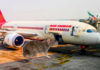 rat in air india flight varanasi